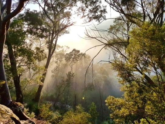 Blue Gum Trail Hornsby (16)