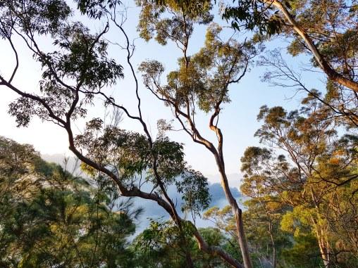Blue Gum Trail Hornsby (17)