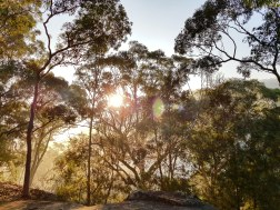 Blue Gum Trail Hornsby (18)