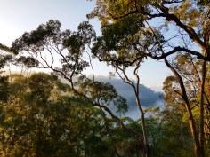 Blue Gum Trail Hornsby (19)