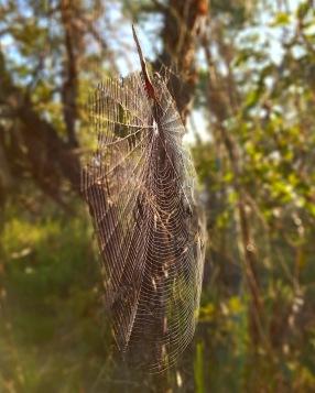 Blue Gum Trail Hornsby (2)