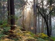 Blue Gum Trail Hornsby (20)