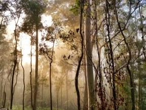 Blue Gum Trail Hornsby (3)