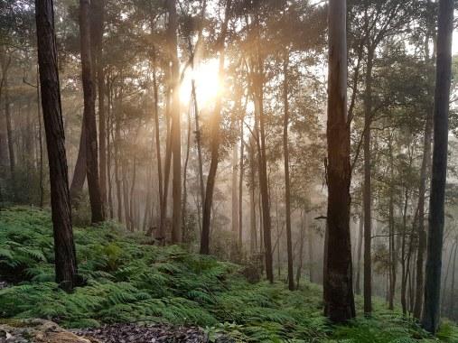 Blue Gum Trail Hornsby (30)