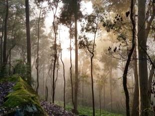 Blue Gum Trail Hornsby (32)