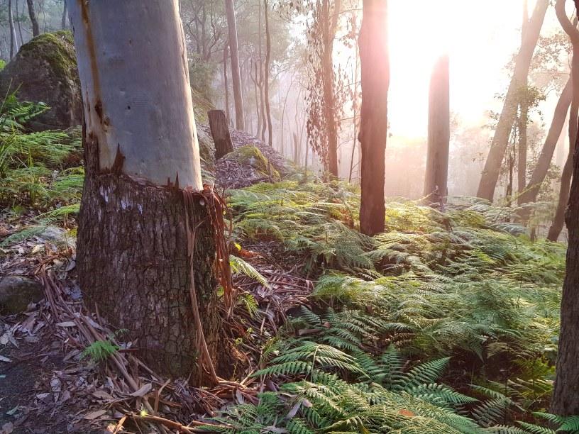 Blue Gum Trail Hornsby (35)