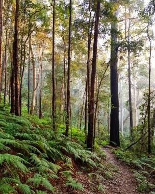 Blue Gum Trail Hornsby (39)