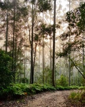 Blue Gum Trail Hornsby (40)