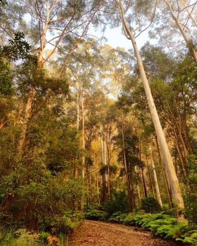 Blue Gum Trail Hornsby (41)