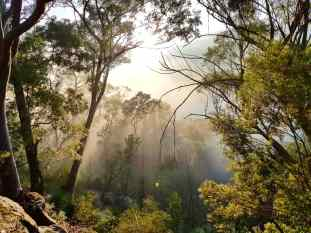 Blue Gum Trail Hornsby (43)