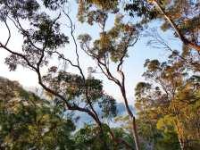 Blue Gum Trail Hornsby (44)