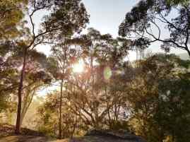 Blue Gum Trail Hornsby (45)
