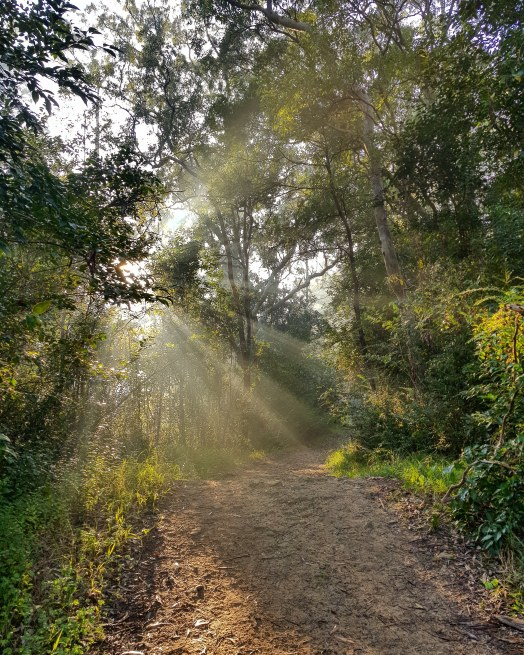 Blue Gum Trail Hornsby (5)